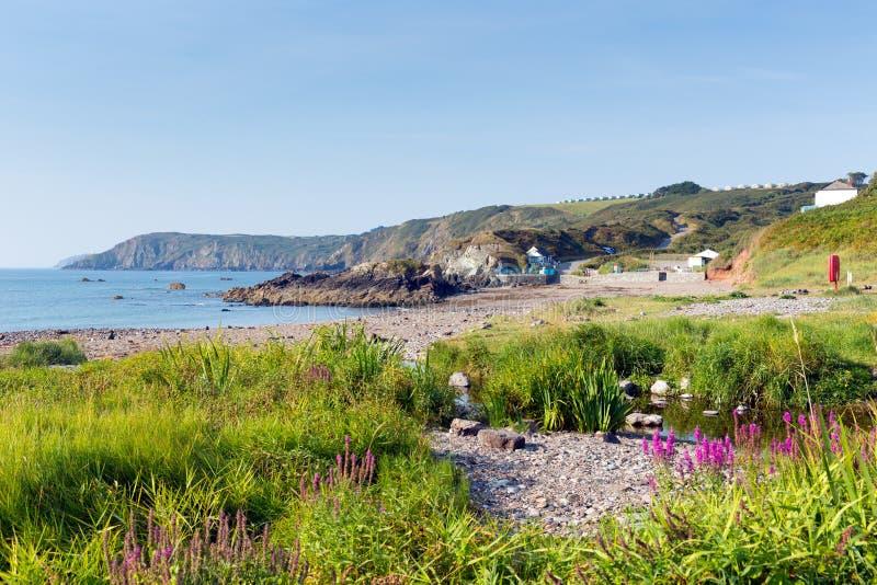 Rosa blüht Kennack-Sandstrand Cornwall die Eidechsen-Erb-Küste Süd- West-England mit blauem Himmel auf einem sonnigen Sommermorge stockfotografie