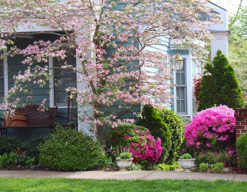 Rosa Blüten feiern Frühling an landschaftlich gestaltetem Haus stockfoto