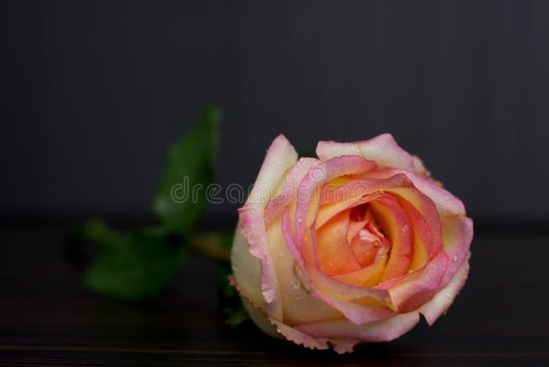 Rosa blomma arkivfoto