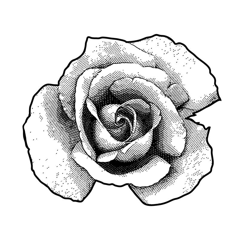 Rosa blomma för singel royaltyfri illustrationer