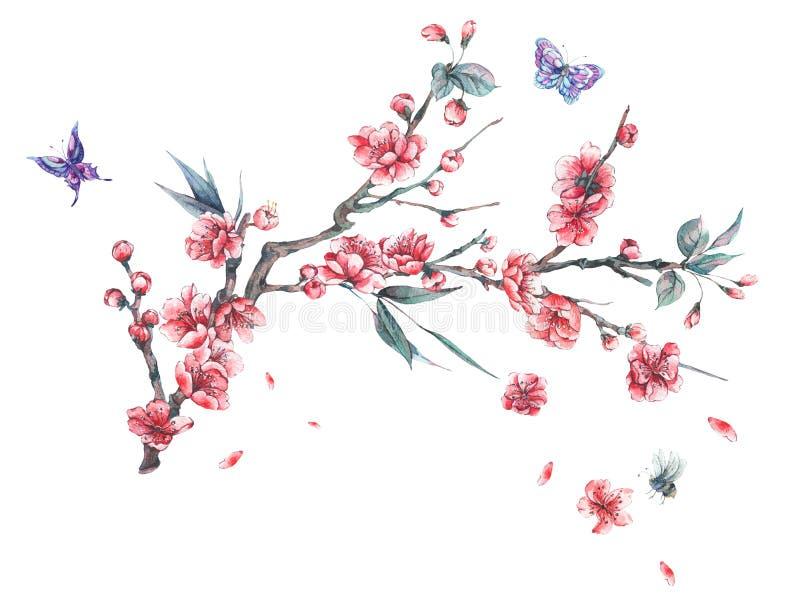 Rosa blomma filialer för vattenfärgvår av körsbäret royaltyfri illustrationer