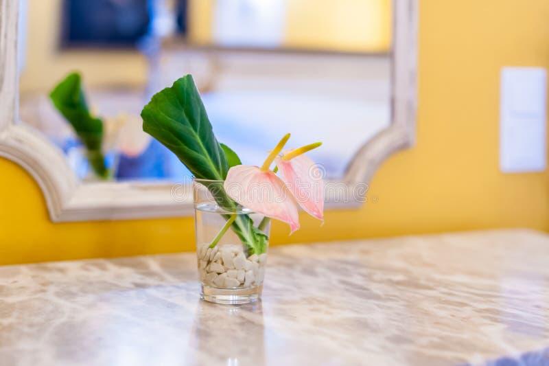 Rosa blomma och grönt blad i litet genomskinligt exponeringsglas arkivbilder