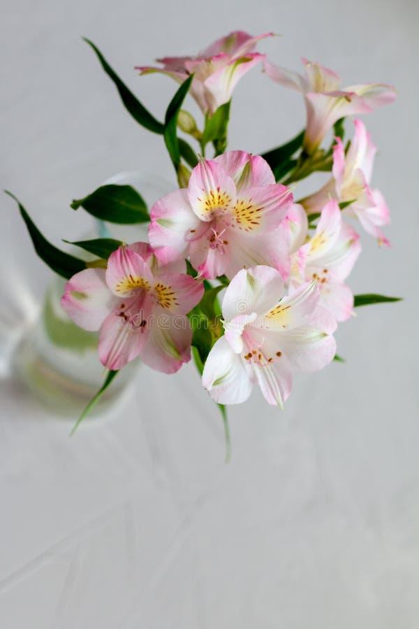 Rosa blommabukett för Alstroemeria med utrymme för text, mall för vykort royaltyfri foto