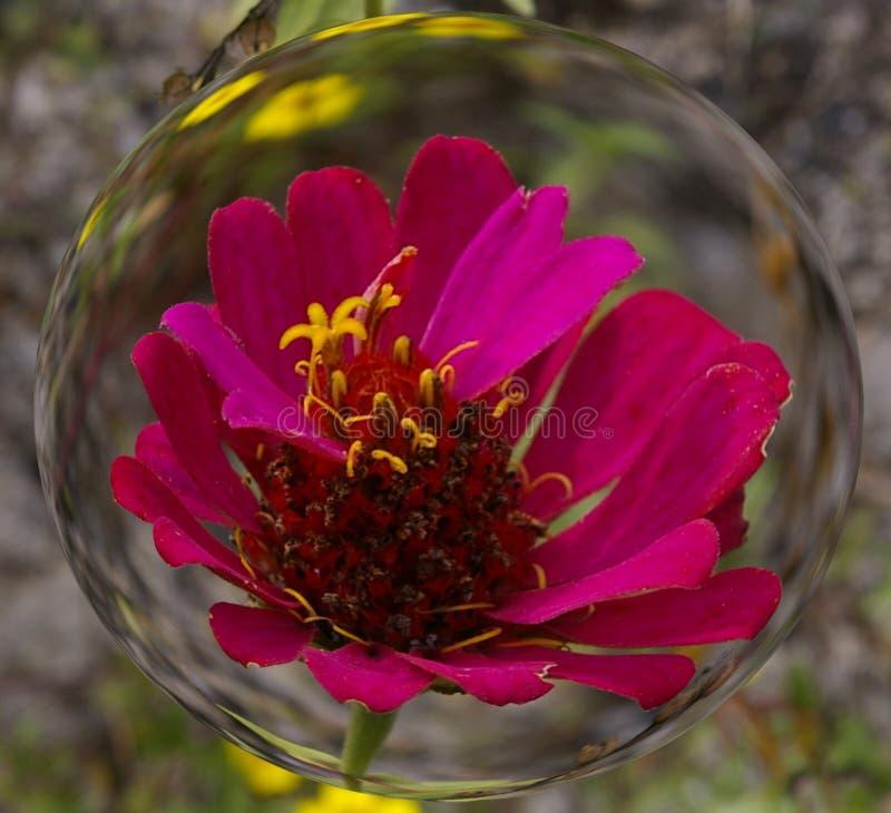 Rosa blomman i glas royaltyfri bild