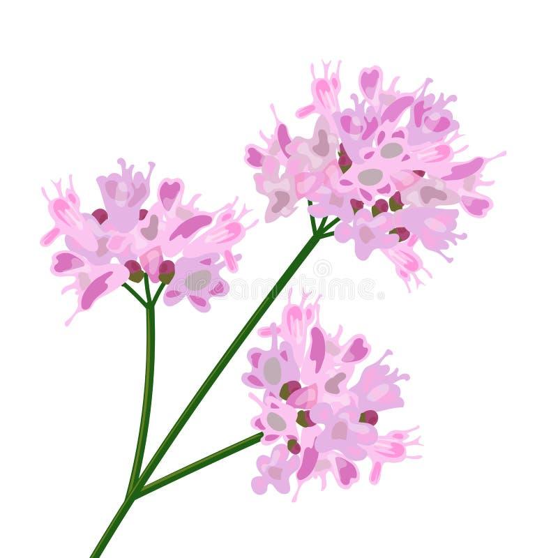 Rosa blommor close upp stock illustrationer