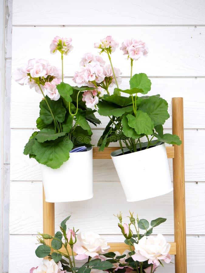 Rosa blommor dekorerar väggarna royaltyfri foto