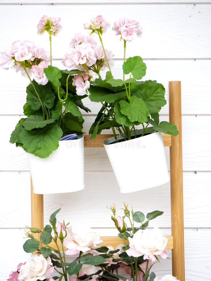 Rosa blommor dekorerar väggarna royaltyfri fotografi