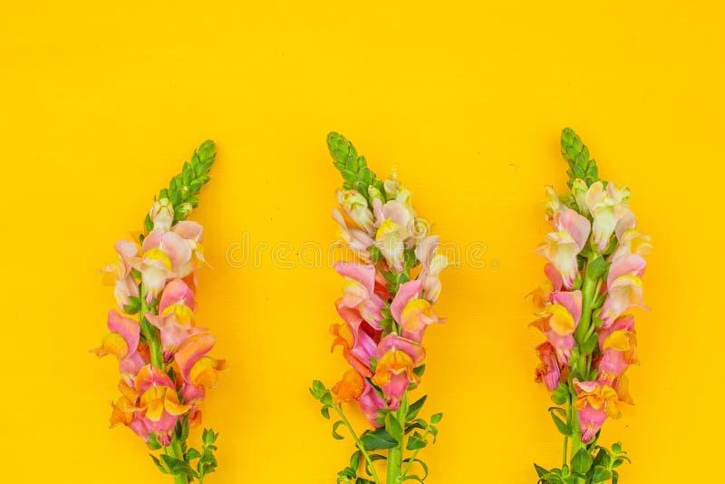 Rosa blommor för härlig vår på gul pastellfärgad bästa sikt för tabell blom- kant Lekmanna- l?genhet royaltyfri fotografi