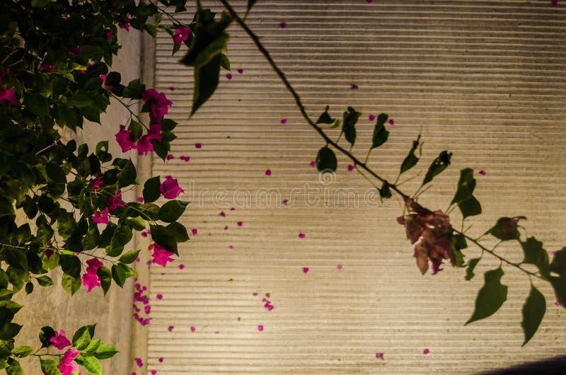 Rosa blommor med gröna sidor mot bakgrunden av en gata med korsade linjer arkivfoton