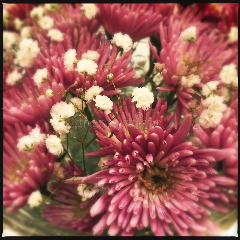 Rosa blommor närmar sig royaltyfri fotografi