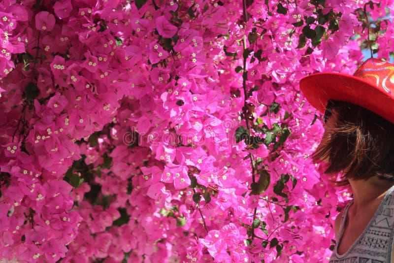 Rosa blommor och en kvinna i hatt arkivfoton