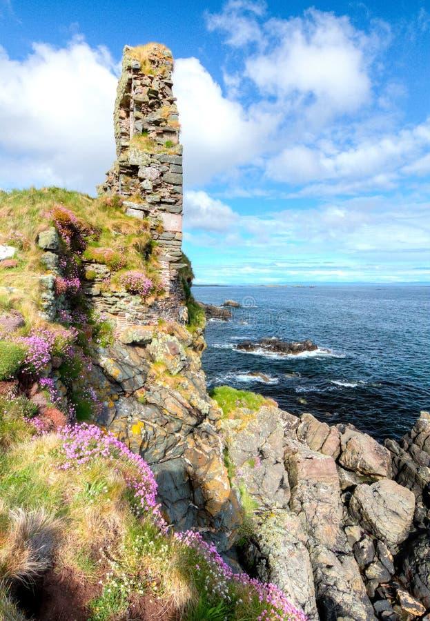 Rosa blommor växer på stora havsklippor i Skottland royaltyfria bilder