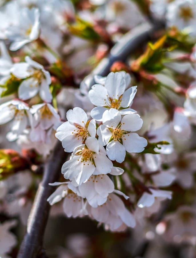 Rosa blomningar arkivfoto