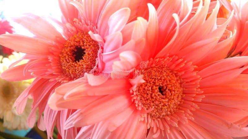 Rosa Blume an der Swimmingpoolseite lizenzfreie stockfotografie