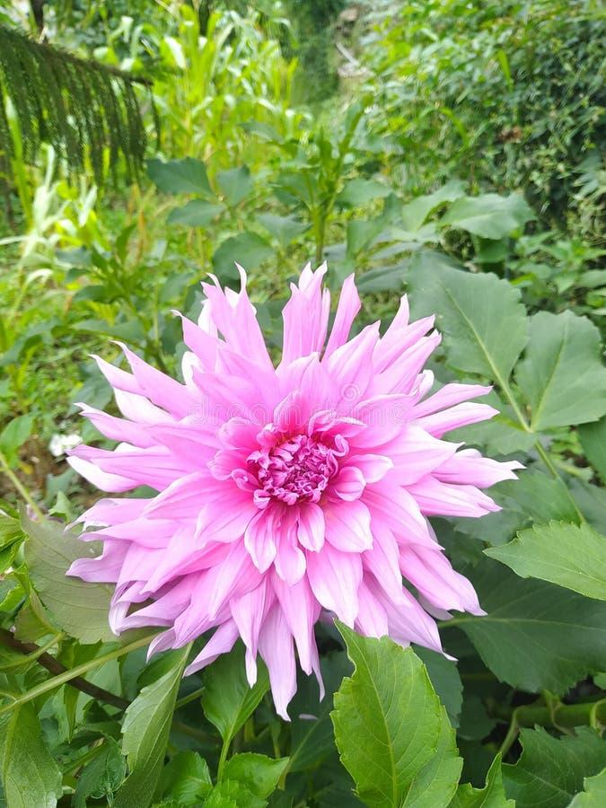 Rosa Blume in einer Gartentapete stockfotografie
