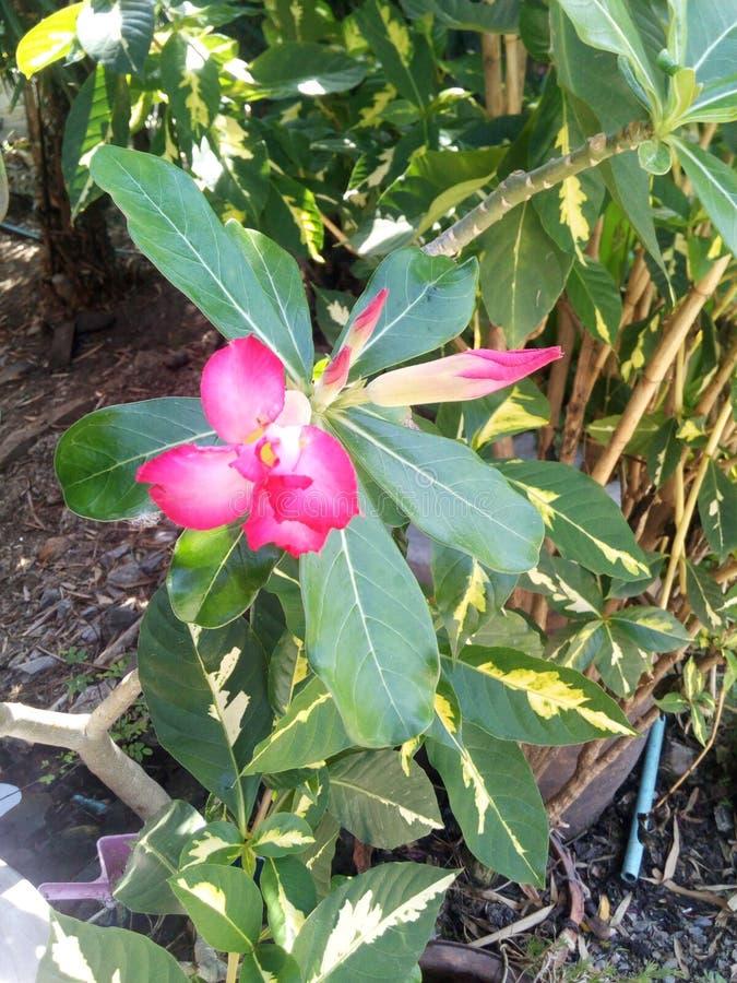 - rosa Blume - Grünblätter stockbild