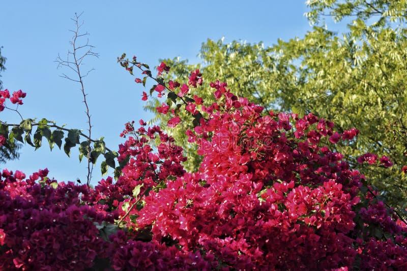 Rosa Blume hervorgehoben - 4 lizenzfreie stockbilder