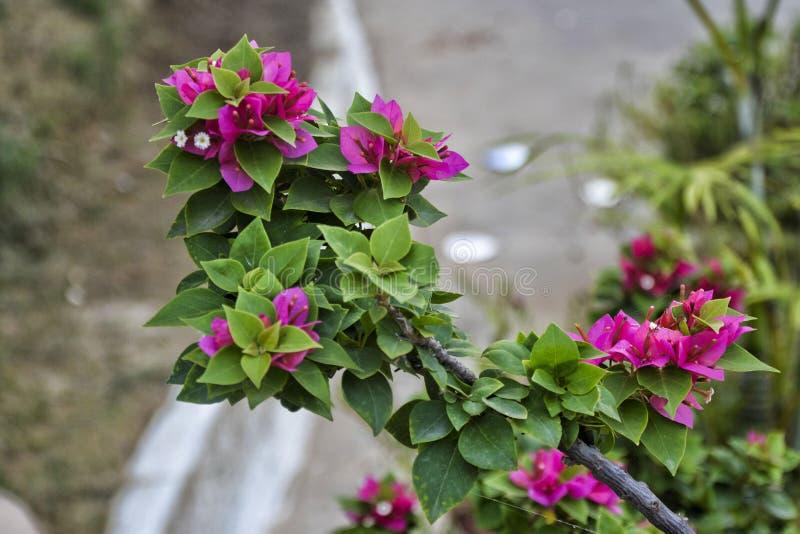 Rosa Blume hervorgehoben - 7 stockbilder