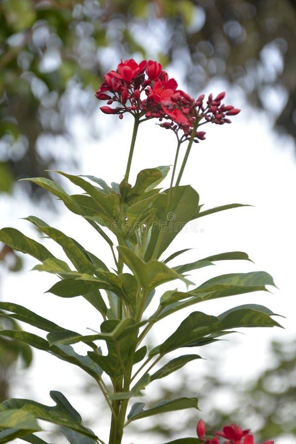Rosa Blume hervorgehoben - 10 stockbild