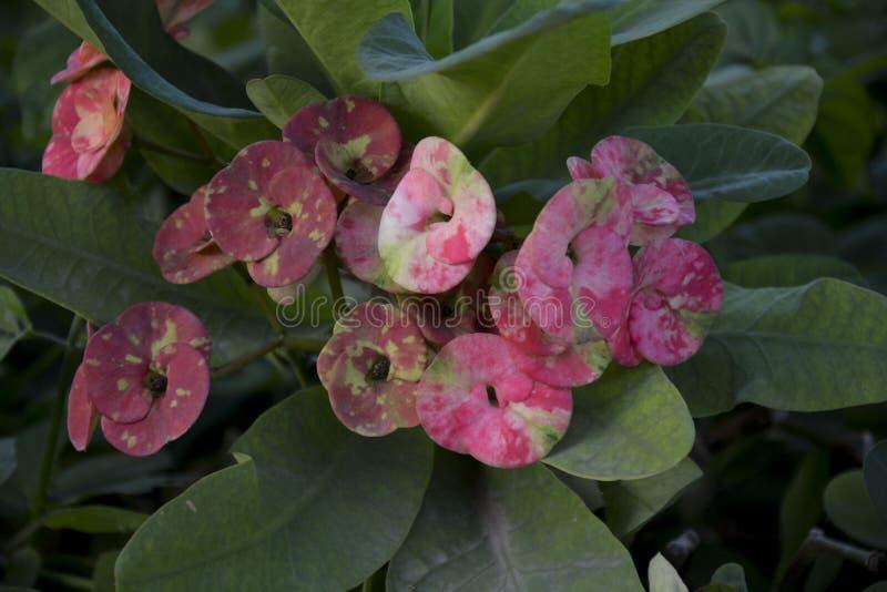 Rosa Blume hervorgehoben - 25 stockfoto