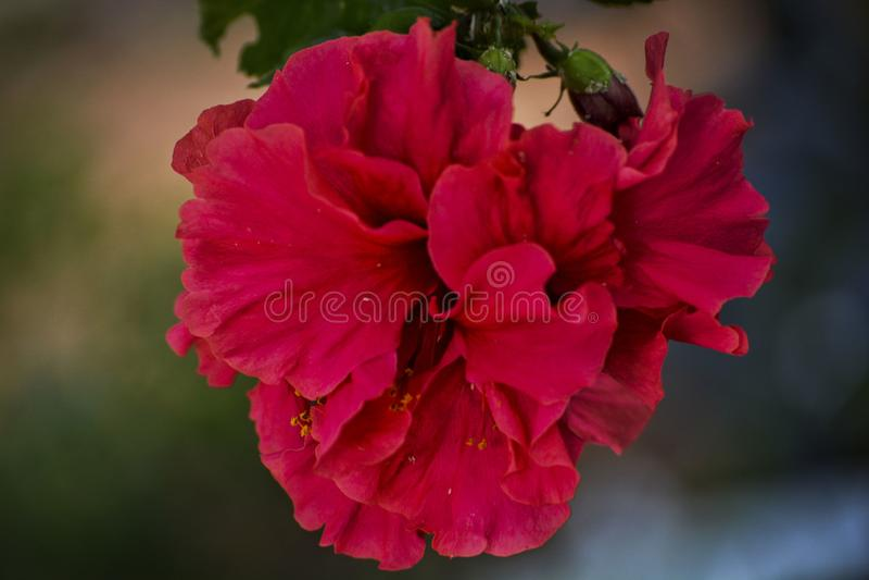 Rosa Blume hervorgehoben - 5 stockbild