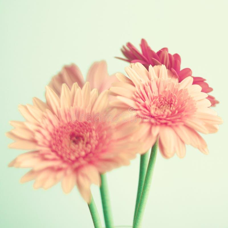 Rosa Blumen über Minze lizenzfreie stockfotografie