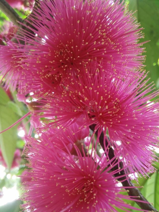 Rosa Blumen stockfotos