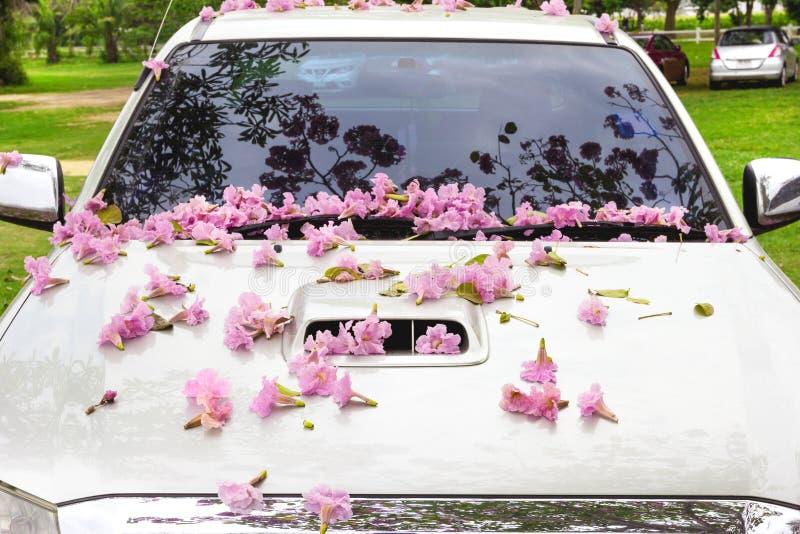 Rosa Blumen auf der Mütze stockfotografie