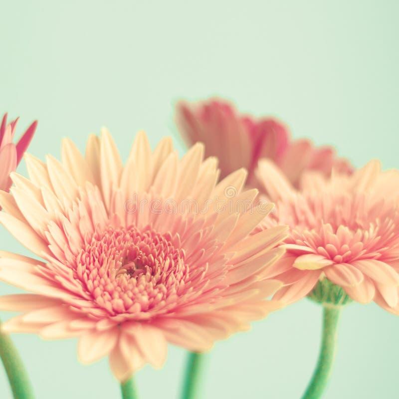 Rosa Blumen auf Minze stockfotos