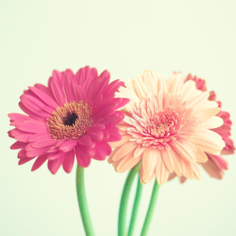 Rosa Blumen auf Minze lizenzfreie stockfotos