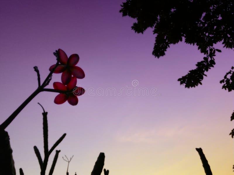 rosa Blumen auf purpurrotem Himmel stockfotografie