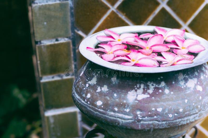 Rosa Blumen der Nahaufnahme, die in altes Becken schwimmen stockbild