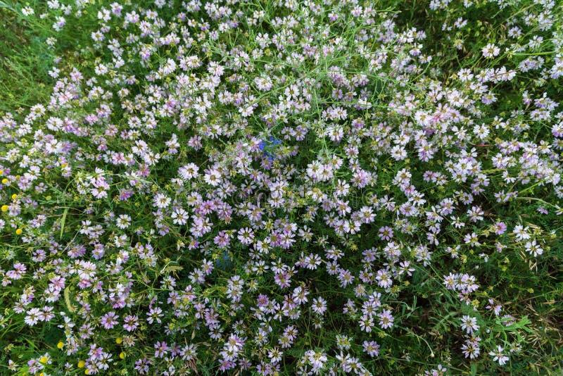 Rosa Blumen in der Wiese obenliegend stockbild