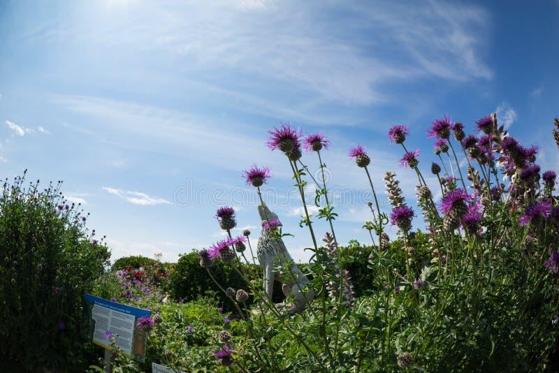 Rosa Blumen in einem üppigen Laub des Gartens lizenzfreie stockfotografie