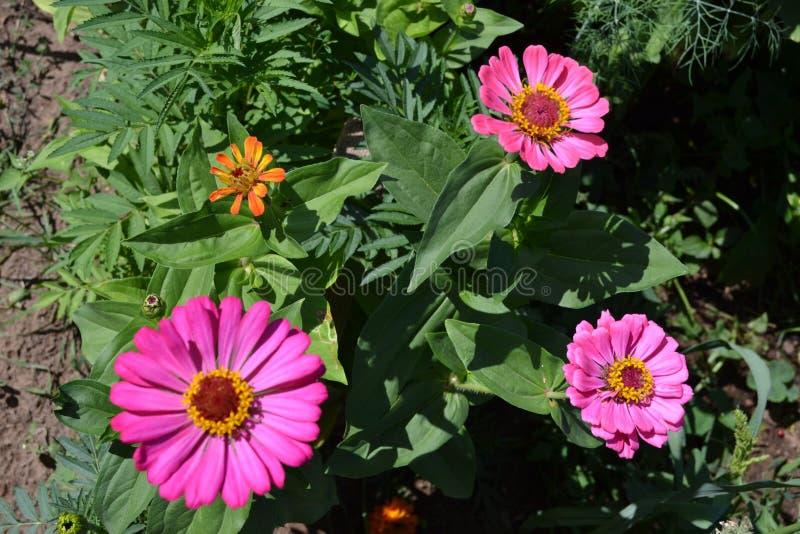 Rosa Blumen im Garten - Landschaft lizenzfreie stockfotografie