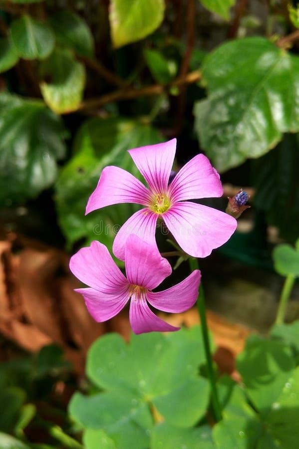Rosa Blumen mit Hintergrundblättern lizenzfreie stockfotografie