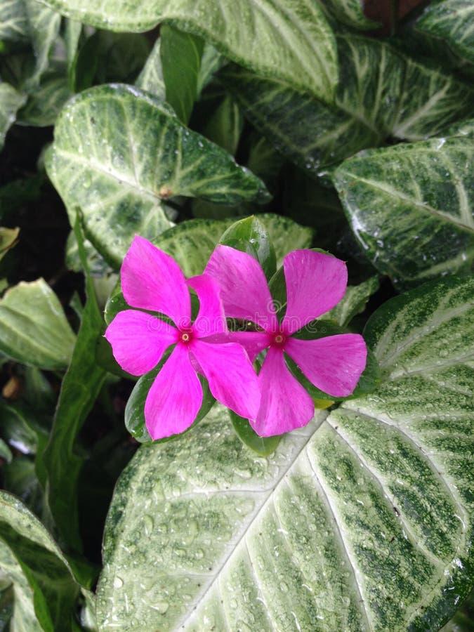 rosa Blumen mitten in dem Grün lizenzfreie stockfotografie
