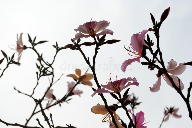 Rosa Blumen-Muster lizenzfreie stockbilder
