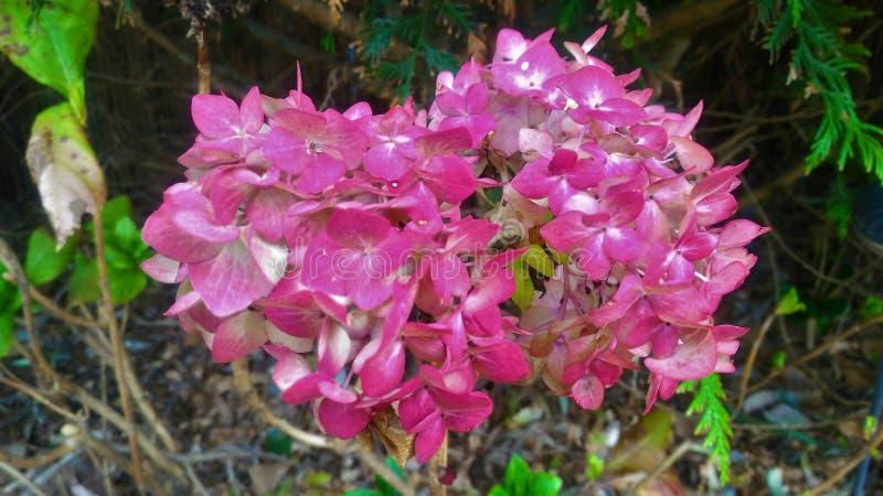 Rosa Blumen, Punta del Este lizenzfreie stockfotografie