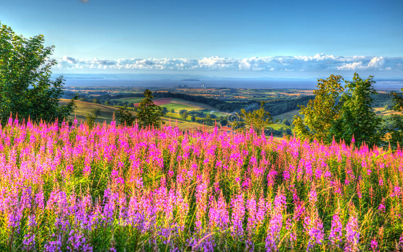 Rosa Blumen und Ansicht von Quantock-Hügeln Somerset England Großbritannien in Richtung zu Hinkley zeigen Atomkraftwerk HDR stockfoto