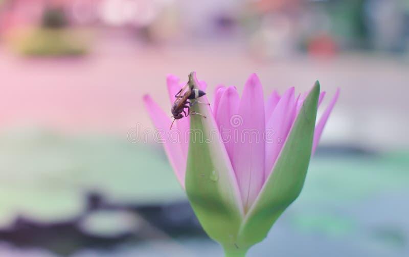 Rosa Blumen und kleines Insekt stockfotografie