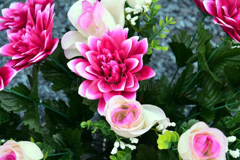 Rosa Blumen und Rosen, romantischer Blumenhintergrund lizenzfreie stockbilder