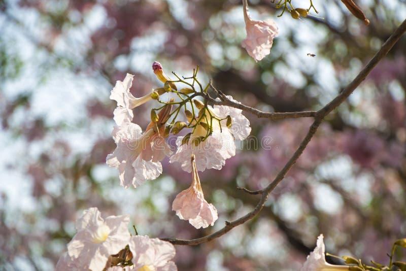 Rosa Blumen verwelken lizenzfreies stockbild