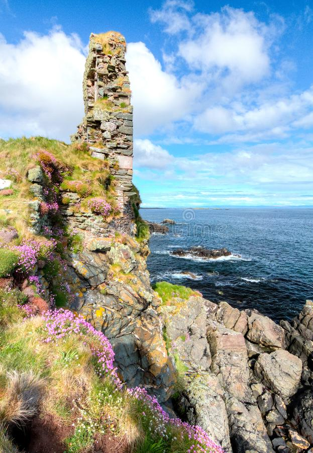Rosa Blumen wachsen auf großen Seeklippen in Schottland lizenzfreie stockbilder