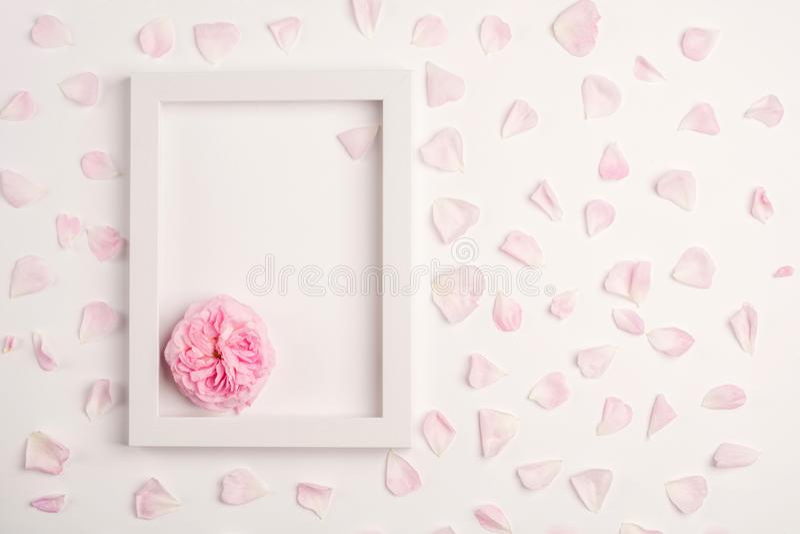 Rosa Blumenblätter, stiegen Blume und leerer Rahmen auf weißem Hintergrund stockbilder