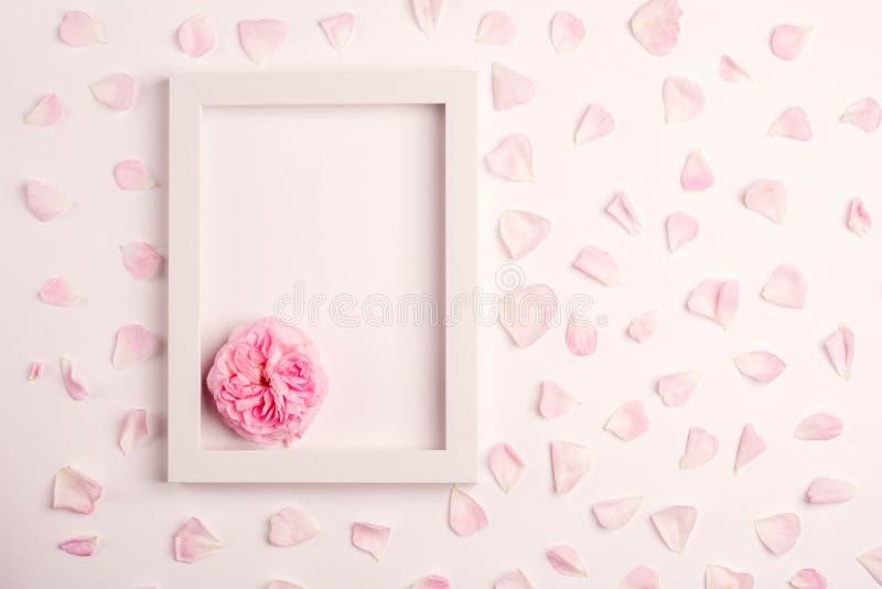 Rosa Blumenblätter, stiegen Blumen- und Fotorahmen auf rosa Hintergrund lizenzfreie stockfotografie