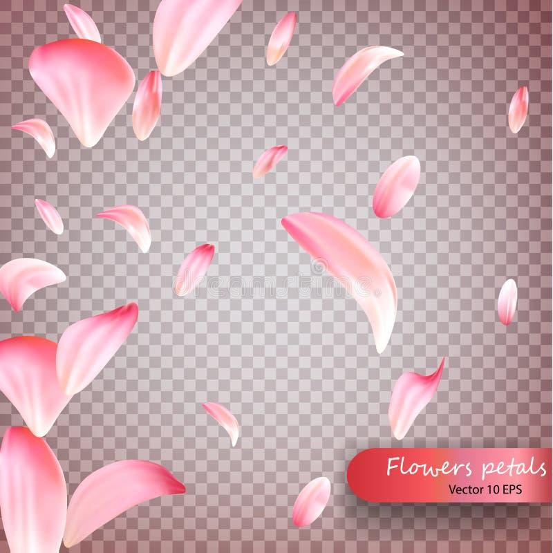 Rosa Blumenblatt-Vektorhintergrund Kirschblütes fallender Hochzeits-, Valentinsgruß- oder Frauentagesrosa-Blumenblüten, die in Wi lizenzfreie abbildung