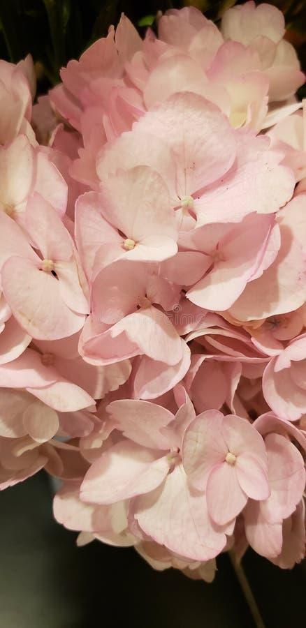 Rosa Blumenblumenstrau? lizenzfreies stockbild