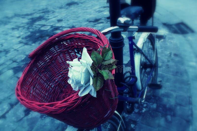 Rosa bonita do branco e uma cesta vermelha na bicicleta imagens de stock royalty free