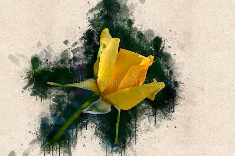 Rosa bonita pintada aquarela do amarelo ilustração stock